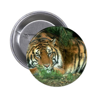 Bengal Tiger Round Button