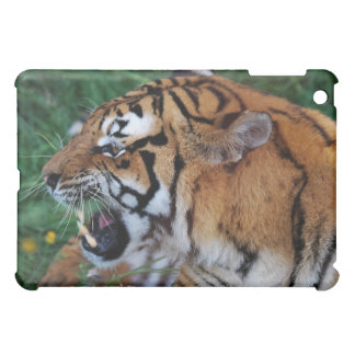 Bengal Tiger showing its fangs Case For The iPad Mini