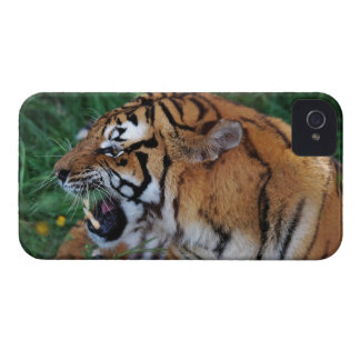Bengal Tiger showing its fangs iPhone 4 Case