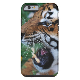 Bengal Tiger showing its fangs Tough iPhone 6 Case