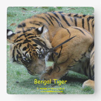 Bengal Tiger Square Wall Clock