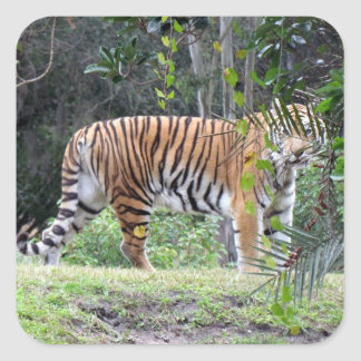 Bengal Tiger Stickers