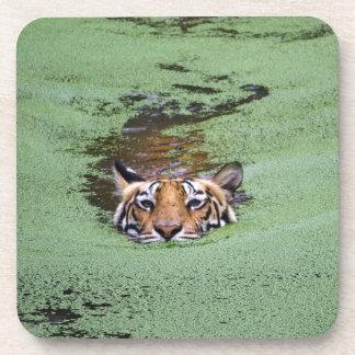 Bengal Tiger Swimming Coaster