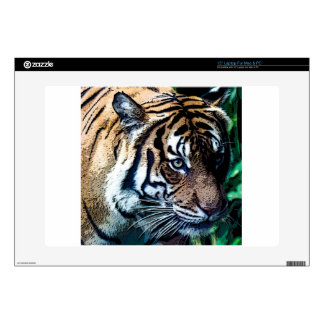 Bengal Tiger Toons Decals For Laptops