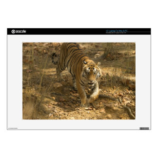 """Bengal Tiger walking 15"""" Laptop Skins"""