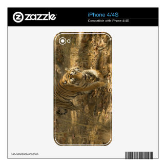 Bengal Tiger walking Decals For iPhone 4S