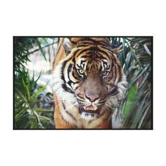 Bengal Tiger watching you Wrapped 2 Canvas Print