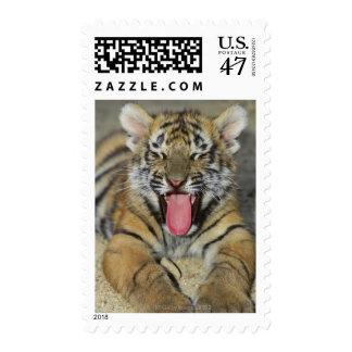 Bengal tiger yawning postage