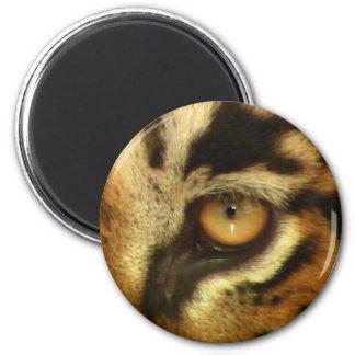 Bengal Tiger's Eye Wildlife Big Cat Lover Photo Magnet