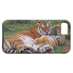 Bengal tigers playing iPhone 5 cases