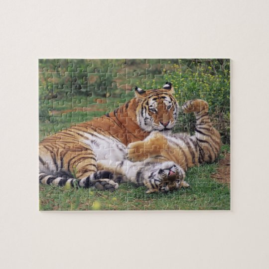 Bengal tigers playing jigsaw puzzle