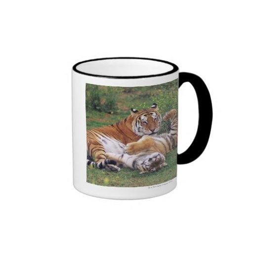 Bengal tigers playing ringer coffee mug