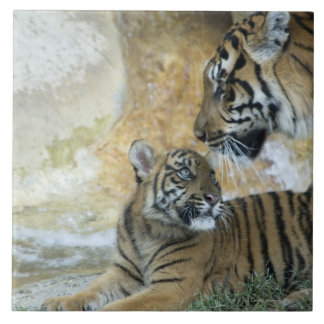 Bengal tigers relaxing tile