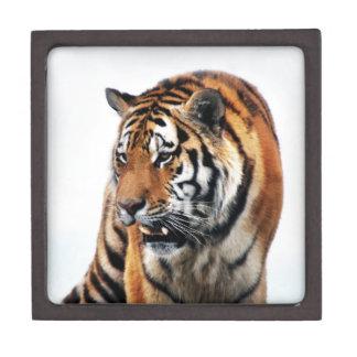 Bengal Tigers Wild Life Jewelry Box