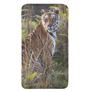 Bengal tigress in tall grass, trying to hunt,