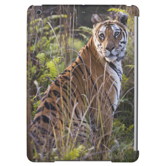 Bengal tigress in tall grass, trying to hunt, case for iPad air