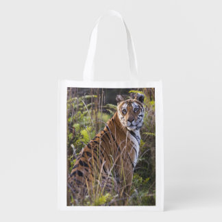 Bengal tigress in tall grass, trying to hunt, grocery bag