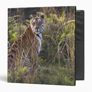 Bengal tigress in tall grass, trying to hunt, vinyl binders