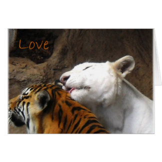 Bengal White Tiger Love Birthday Anniversary Any Card