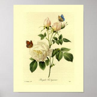 Bengala subió floral botánico póster