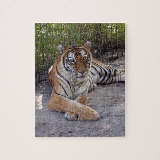 Bengala Tiger-003 Puzzle Con Fotos