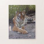 Bengala Tiger-003 Rompecabeza Con Fotos