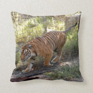 Bengalí 006 del tigre cojin