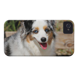 Case-Mate iPhone 4 Barely There Universal Case with Australian Shepherd Phone Cases design