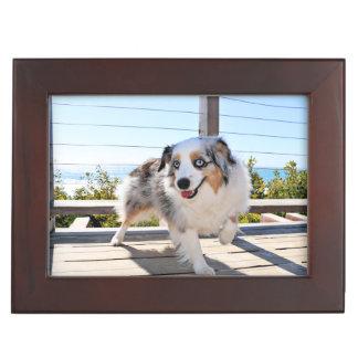 Bennett - Aussie Mini - Rosie - Carmel Beach Memory Box