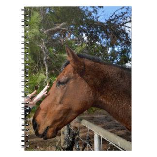 Bennie The Horse Loving A Pat Notebook