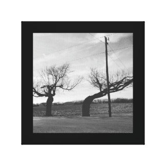 Bent tree country road phone pole photo canvas print
