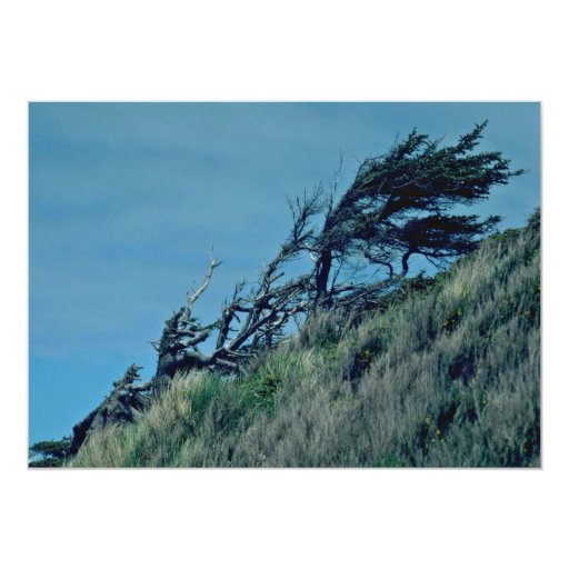 Bent Trees In Storm 5x7 Paper Invitation Card