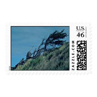 Bent Trees In Storm Stamp