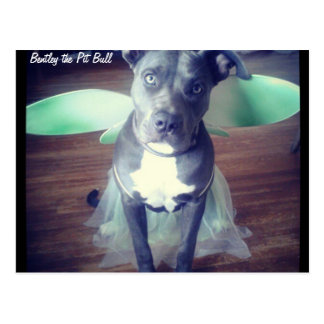 Bentley the Pit Bull Fairy Wings Postcard