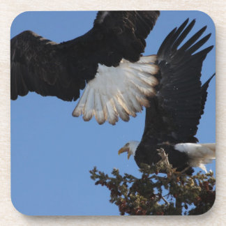 BEOAT Bald Eagles on a Treetop Drink Coaster