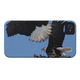 BEOAT Bald Eagles on a Treetop iPhone 4 Cover