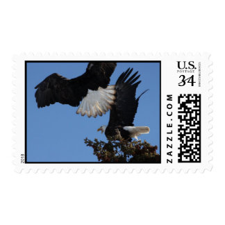 BEOAT Bald Eagles on a Treetop Postage Stamp