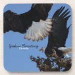 BEOAT Eagles calvo en una copa Posavasos