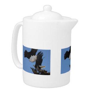 BEOAT Eagles calvo en una copa