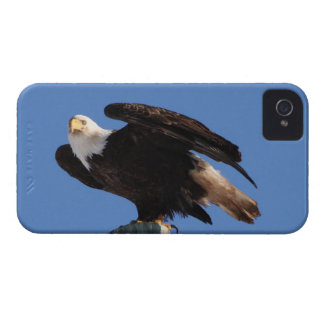 BEOUP Bald Eagle on Utility Pole iPhone 4 Case-Mate Case