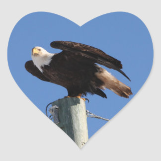 BEOUP Bald Eagle on Utility Pole Stickers