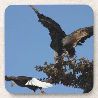 BEPP Eagle calvo que parquea problemas Posavasos De Bebidas