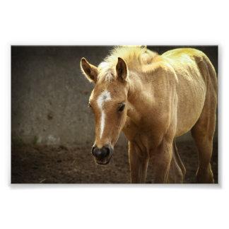 Berber foal photo art
