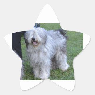 Bergamasco Shepherd Dog Star Sticker