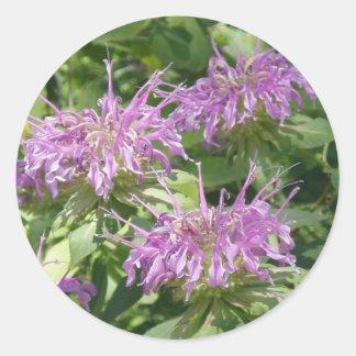 Bergamont Bee Balm Sticker