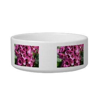 Bergenia Blossom; No Text Bowl
