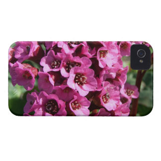 Bergenia Blossom; No Text Case-Mate iPhone 4 Case
