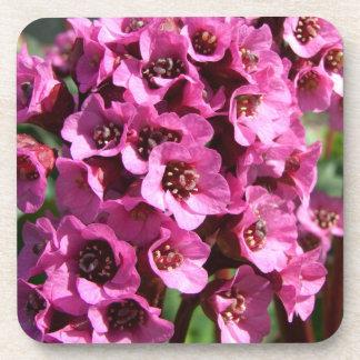 Bergenia Blossom; No Text Drink Coaster