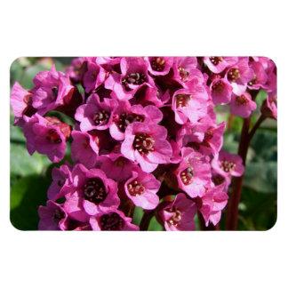 Bergenia Blossom; No Text Magnet
