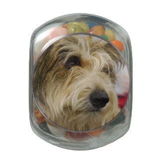 Berger Picard Dog Jelly Belly Candy Jar